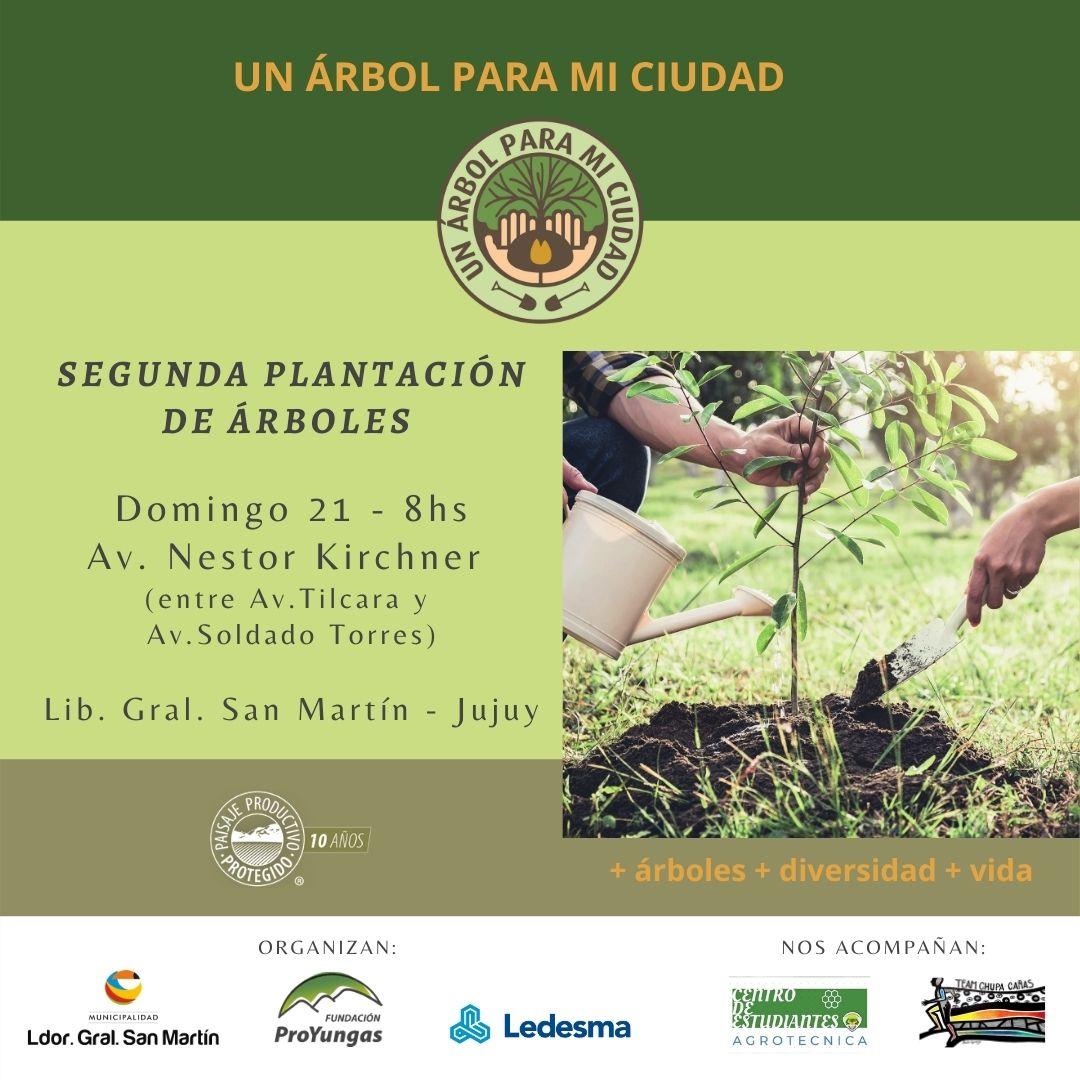 Un árbol para mi ciudad   Plantarán más de 30 lapachos amarillos y cedros