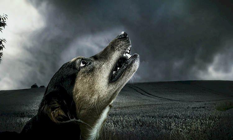 Actividad paranormal   ¿Cómo darse cuenta si tu perro ve un espíritu?