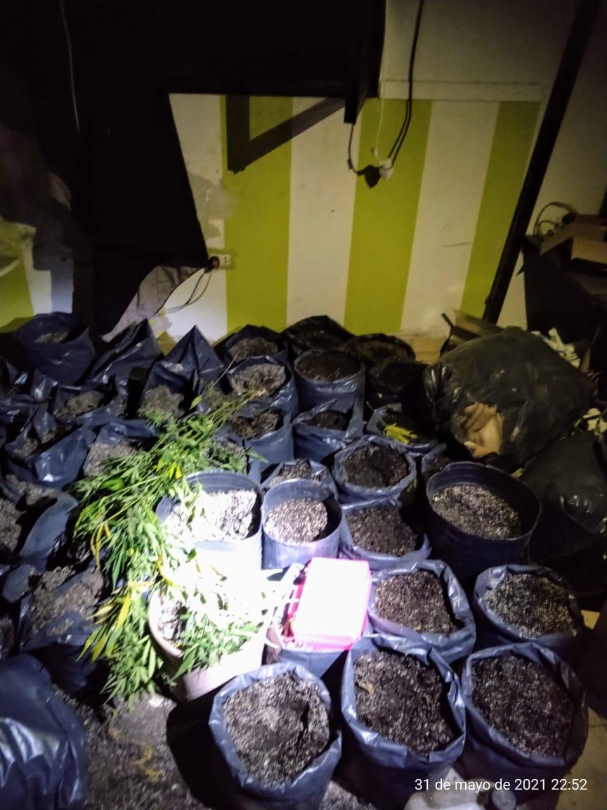 Villa Carmela   Hallaron un laboratorio con 25 plantas de marihuana