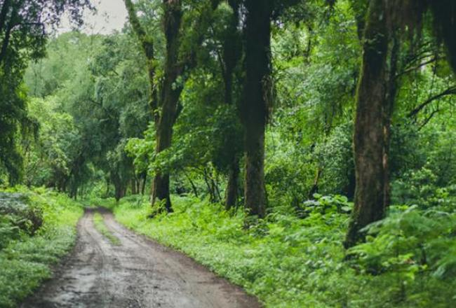 Alerta por la deforestación del bosque nativo